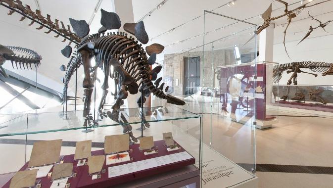 موزه رویال تورنتو