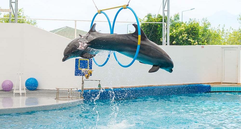 آکوالند و دلفین لند